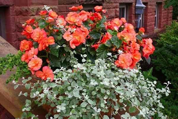 Сажаем цветы на балконе в ящиках mi format.